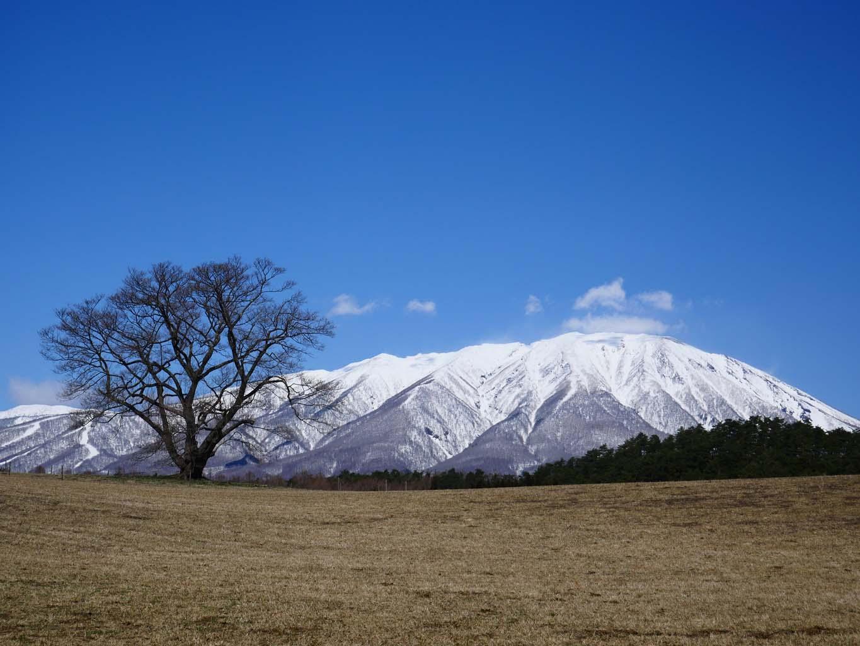小岩井農場 一本桜 | 岩手・盛岡の観光(Morioka・Iwate)