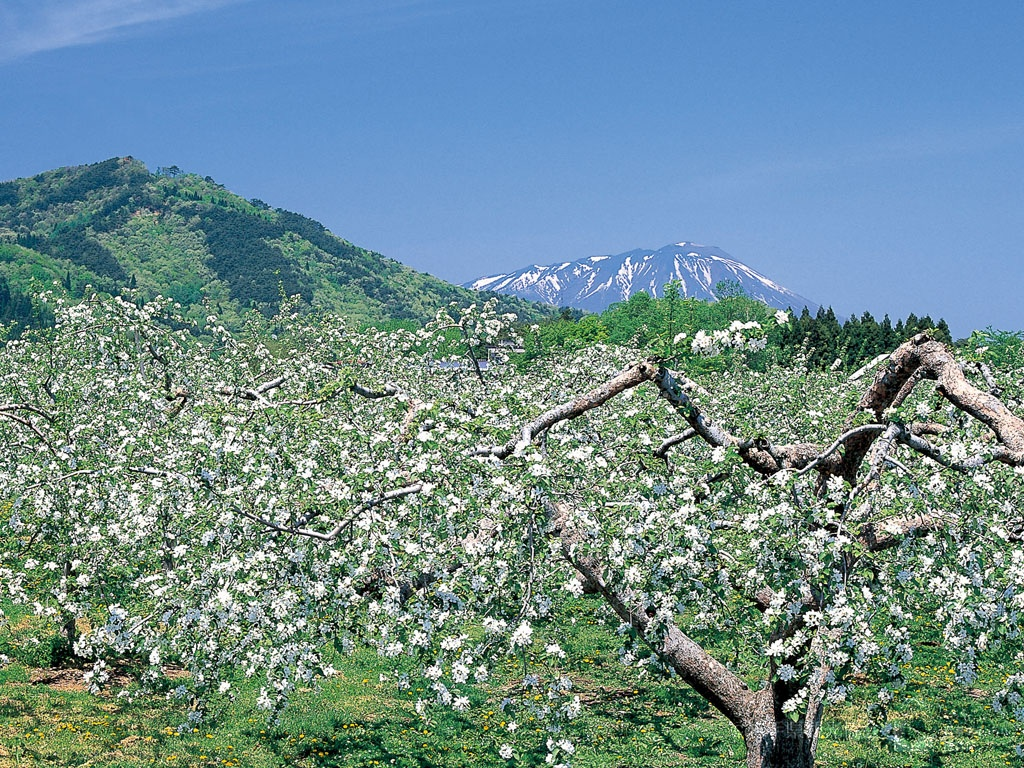 岩手ナチュラル リンゴの花と岩手山 5月