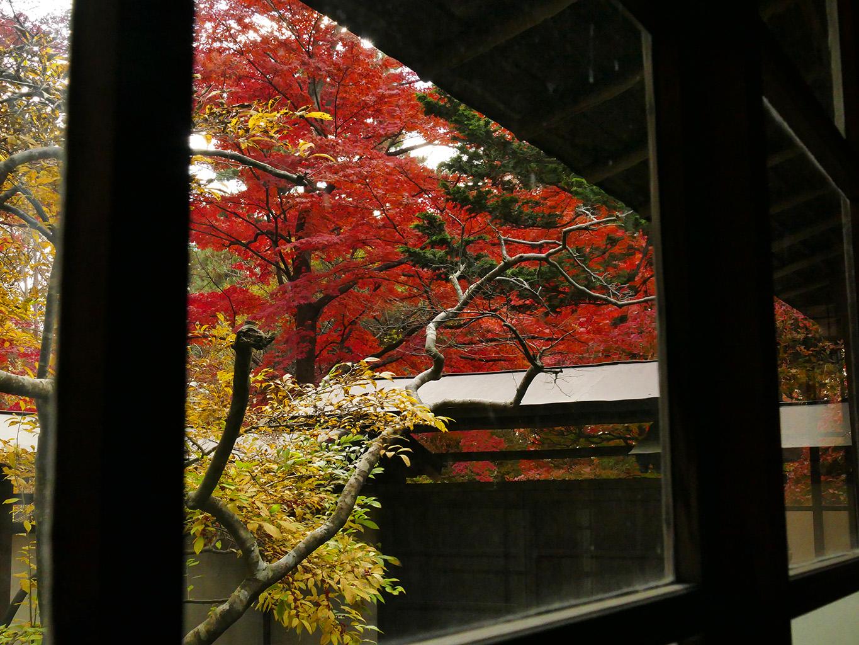 一ノ倉邸 紅葉2015 13