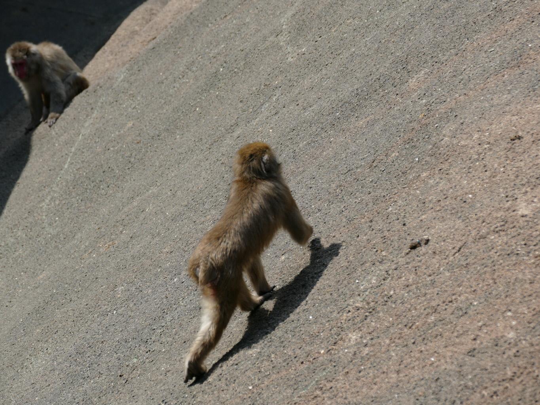 動物公園 サル