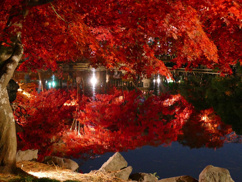 中央公民館ライトアップ2015 5